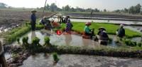 Petani Desa Agom Harapkan Bantuan Sumur Bor