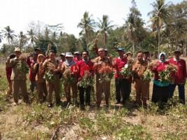 Petani di Ketapang Kembangkan Tanaman Kacang Tanah di Lahan Jagung