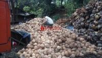 Petani di Lamsel Keluhkan Harga Kelapa yang Anjlok