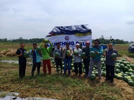 Petani Semangka YBM BRI Panen Raya di Hari Pahlawan