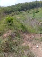 Petani Telukdalem Ilir Keluhkan Program Cetak Sawah Mandek