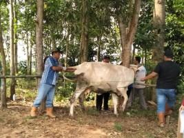Peternak di Kecamatan Sekampung Dukung Penuh Kegiatan Yanduwan