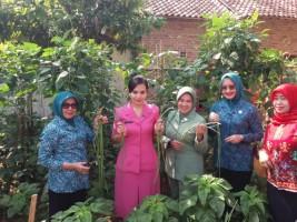 PKK Lamteng Launching Wisata Edukasi Kampung Sayur dan Buah