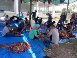PKS Pesisir Barat Gelar Pemotongan Hewan Kurban untuk Dibagikan Warga