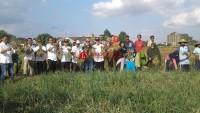 Plt Bupati Panen Bawang Merah di Desa Banjarejo Batanghari