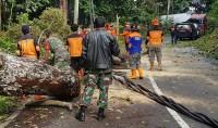 Pohon Tumbang, Akses Jalan Krui-Liwa Tersendat