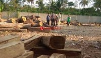 Polhut Amankan Kayu Ilegal Loging Plus Sopir Pengangkut