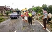 Polisi Dan Warga Berjibaku Evakuasi Pohon Tumbang