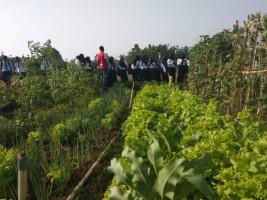 Prodi PTP Polinela Kembangkan Pertanian Organik