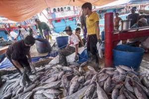 Produksi Ikan Lambar 2018 Capai 8.527,04 Ton