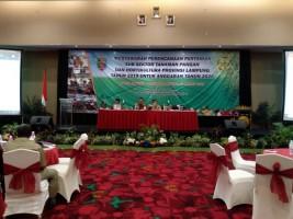 Produksi Padi, Jagung, dan Kedelai di Lampung Kompak Meningkat