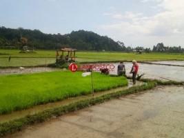 Program AUTP Mulai Diminati Petani di Lampung Barat
