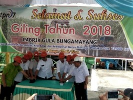 PTPN VII Optimistis Pabrik Bunga Mayang Maksimal