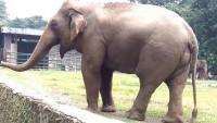 Rumah Sakit Gajah