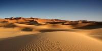 Sahara Rumah Spesies Laut