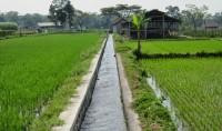 Saluran Irigasi Tersier di Lampung Utara Rusak