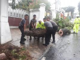 Samapta Polda Lampung Evakuasi Pohon Tumbang di Jalan Mongonsidi