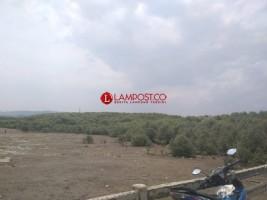 Sampah dan Bahan Kimia Turut Andil atas Kerusakan Hutan Mangrove