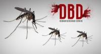 Sepanjang Januari, Terdapat 1.159 Kasus DBD di Lampung