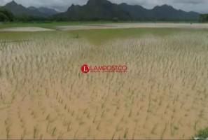 Seratusan Hekatre Sawah di Pesisir Selatan Terendam Banjir