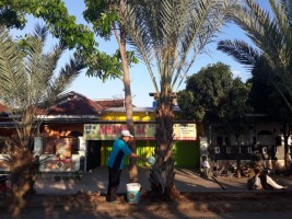 Subandoro, Marbut Pemelihara Pohon Kurma di Cik Ditiro