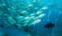 Suhu Laut dan Suplai Ikan
