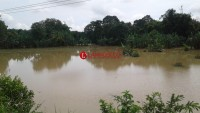 Terendam Banjir, 302 Ha Tanaman Padi dan Jagung di Lamtim Puso