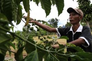 Warga Berharap Mukhlis Bisa Perjuangkan Nasib Petani Kopi