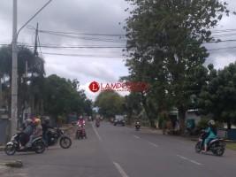 Warga Minta Pohon Besar di Jalan Soekarno-Hatta Kotabumi Dipangkas