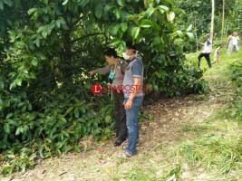 Warga Wonosobo Temukan Mayat Anonim di Pohon Manggis