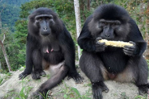 LAMPUNG POST | Tiga Babon Berkeliaran