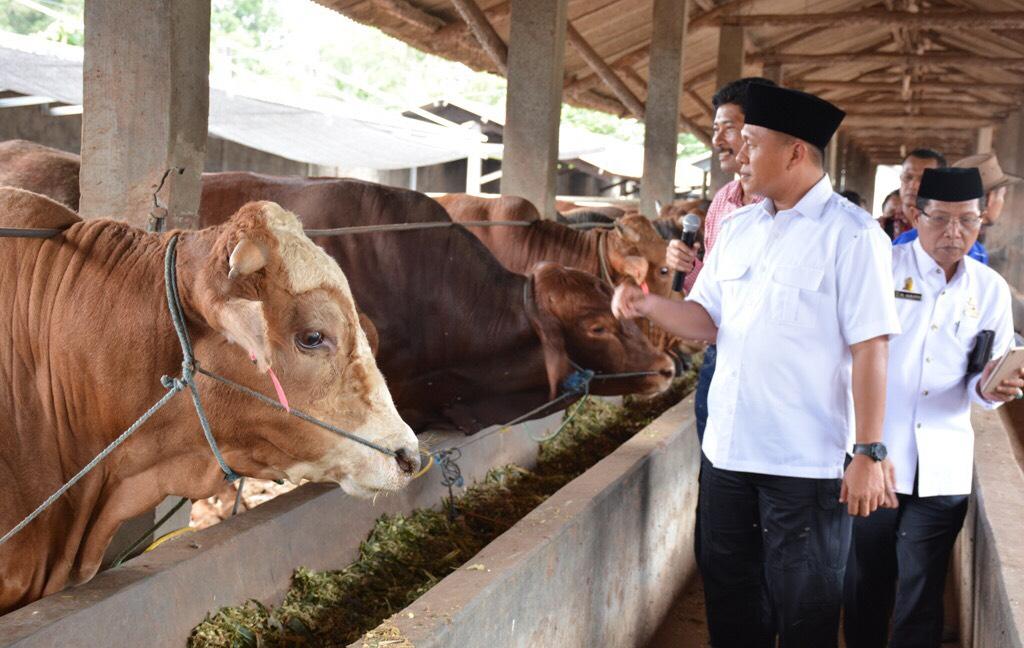Layani Inseminasi Buatan Gratis, Pemkab Lampung Tengah Targetkan 60 Ribu Sapi Bunting