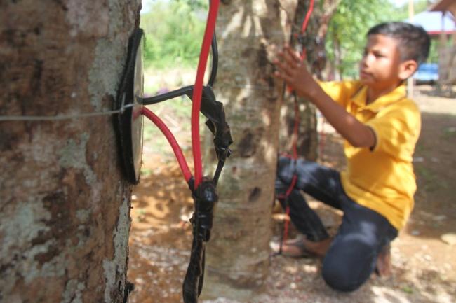 LAMPUNG POST | Ubah Pohon Jadi Sumber Listrik, Bocah Ini Terus Sempurnakan Temuannya