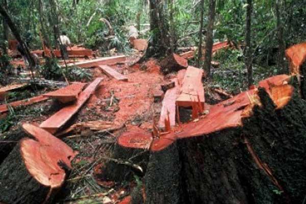 Dalang Pembalakan di Register 22 Way Waya Jadi DPO Polres Lampung Tengah