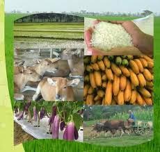 Lampung Barat Kembangkan Perkebunan dan Peternakan