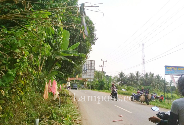 LAMPUNG POST | Astaga, Sampah Bra dan Celana Dalam Berserakan di Perbatasan Pesawaran-Bandar Lampung