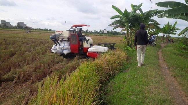 LAMPUNG POST   Petani di Lamsel Tertarik Gunakan Mesin Pemanen Padi