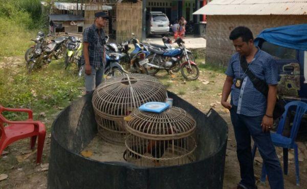 Bocor, Penggerebekan Judi Sabu Ayam Hanya Dapati 18 Motor Tanpa Pemilik