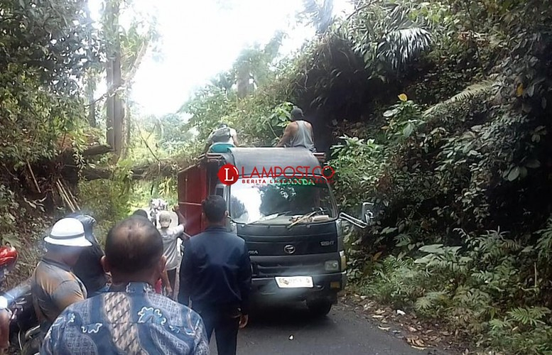 Hujan Deras, Pohon Tumbang Tutupi Akses Jalan di Desa Canggung