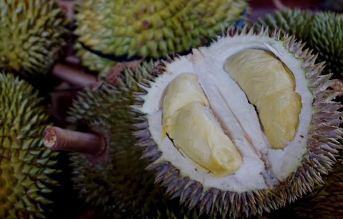LAMPUNG POST   Cara Mudah Memilih Durian yang Matang