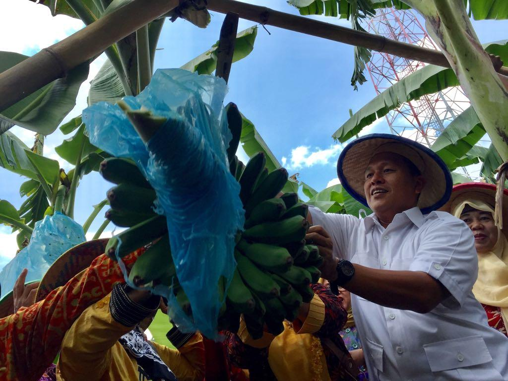 LAMPUNG POST | Gandeng Perusahaan, Mustafa Kembangkan Budi Daya Pisang Rajabulu