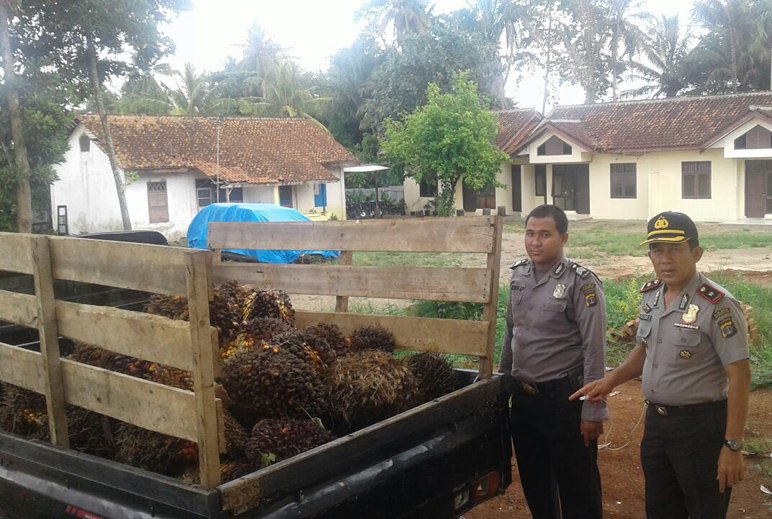 Polsek Gedongtataan Amankan 300 Kg Kelapa Sawit Hasil Curian