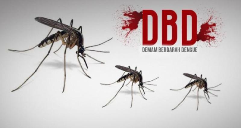 228 Warga Lamtim Tercatat Terjangkit DBD
