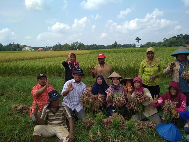LAMPUNG POST | Nunik Sambangi Petani Bawang Merah di Lampung Timur