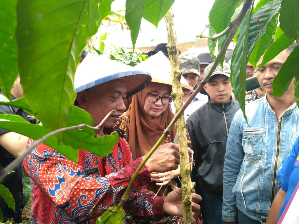 LAMPUNG POST   Petani Kopi di Lambar Harapkan Pelatihan Penyambungan Kopi