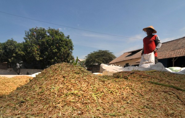 LAMPUNG POST | Penggilingan Padi Mitra Bulog di Lampung Selatan Sulit Dapatkan Gabah