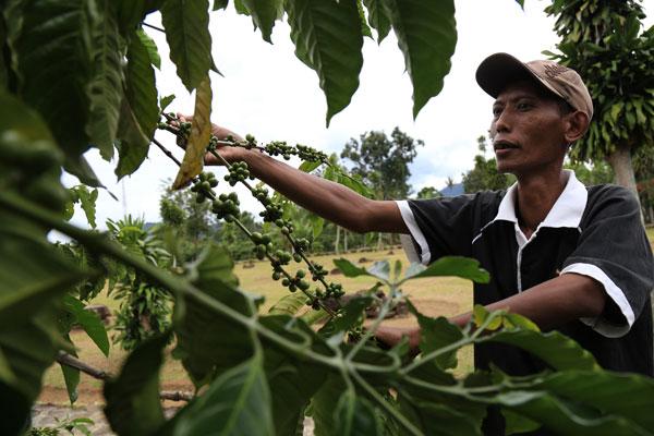 LAMPUNG POST | Pemerintah Perlu Bentuk Penyuluh Muda untuk Petani Kopi