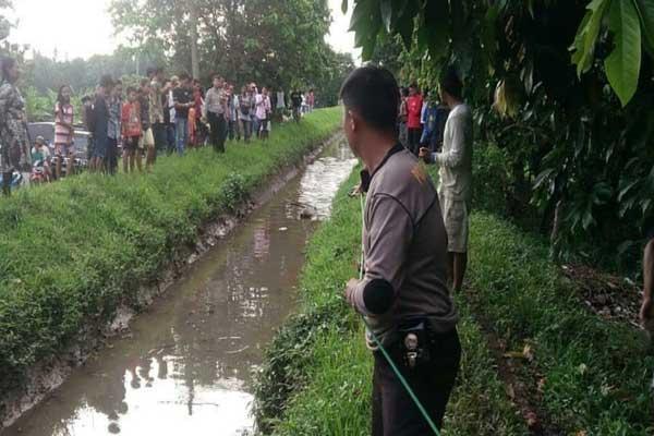 Penemuan Buaya di Irigasi Hebohkan Warga Lampung Timur