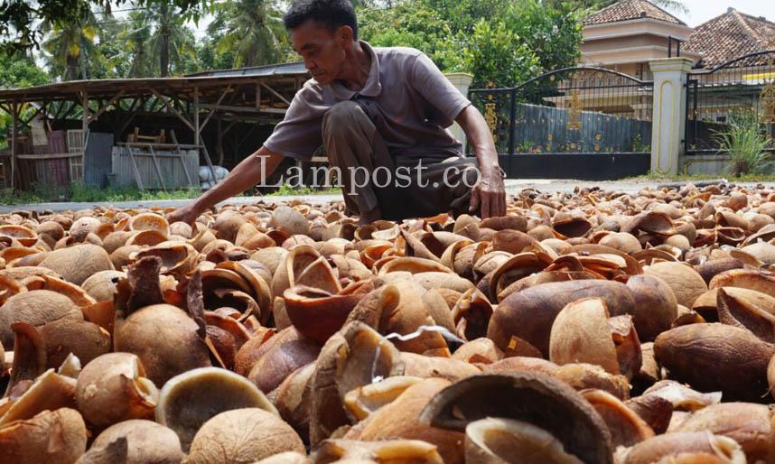 LAMPUNG POST | Harga Kopra di Lampung Selatan Anjlok