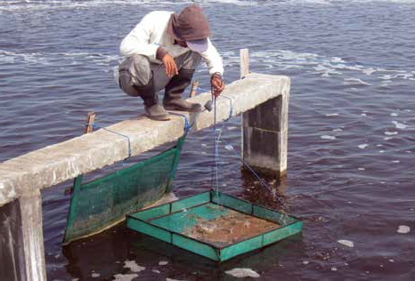Musim Pancaroba Berdampak pada Tambak Udang di Ketapang dan Sragi